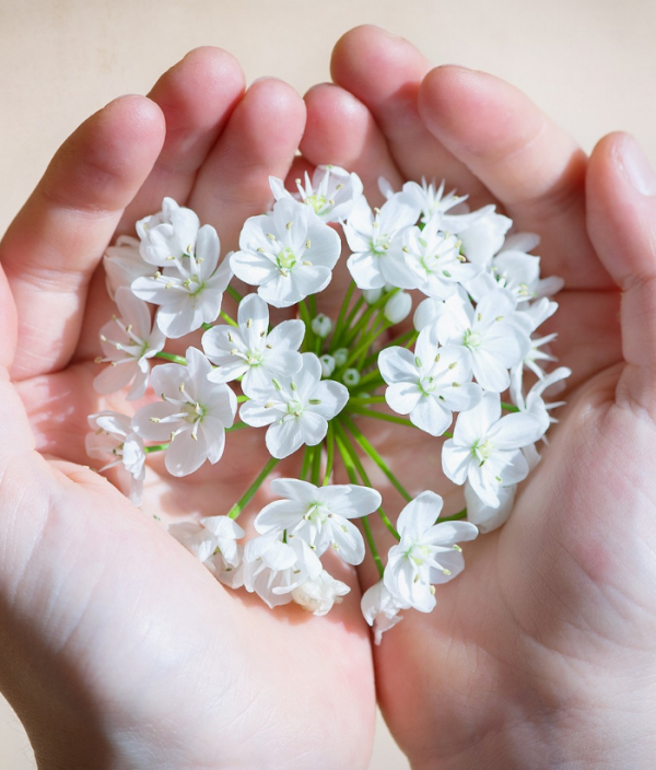 white flowers in hand